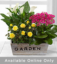 The FTD ® Sunlit Simplicity Dishgarden by Better Homes and Gardens ® - Better