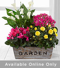 The FTD ® Sunlit Simplicity Dishgarden by Better Homes and Gardens ® - Best