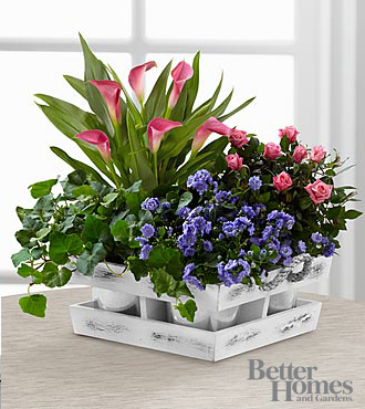 The FTD® Simple Abundance Dish Garden by Better Homes and Gardens®