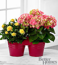The FTD ® Spring 's Welcome Plant Duo by Better Homes and Gardens ®