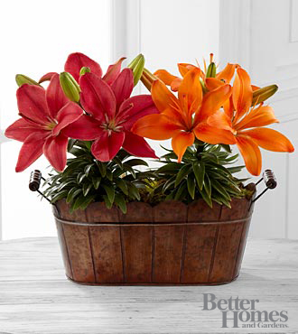 FTD Flowers Colors of Autumn Lily Plant Duo by Better Homes and Gardens