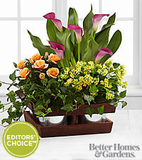 The FTD ® Fall Wonders Dishgarden by Better Homes and Gardens ®