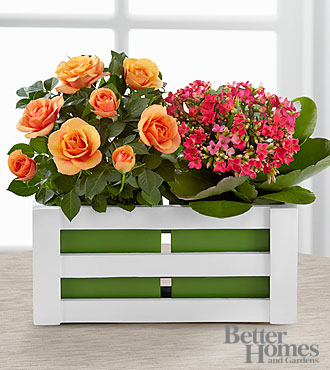 The FTD&reg; Spring Surprises Plant Duo by Better Homes and Gardens&reg; - GOOD