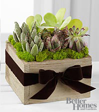 The FTD&reg; Succulent Dishgarden by Better Homes and Gardens&reg;