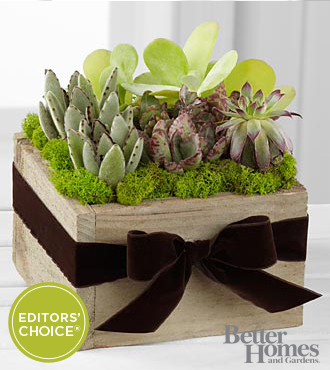 The FTD® Succulent Dishgarden by Better Homes and Gardens®