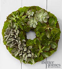 The FTD® Succulent Wreath by Better Homes and Gardens®