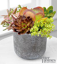 The FTD&reg; Stonescape Succulent Garden by Better Homes and Gardens&reg;