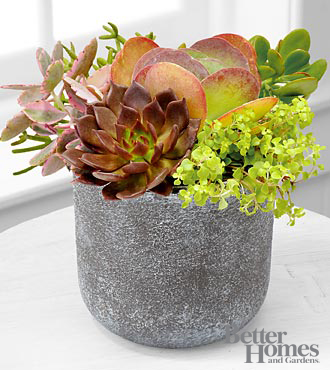 The FTD® Stonescape Succulent Garden by Better Homes and Gardens®