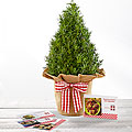 The FTD® Let in the Light Holiday Rosemary Tree & Recipe Cards by Better Homes and Gardens®