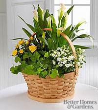 The FTD ® Cheerful Wishes Blooming Basket by Better Homes and Gardens ®
