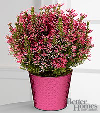 The FTD ® Power of Pink Heather Plant by Better Homes and Gardens ®