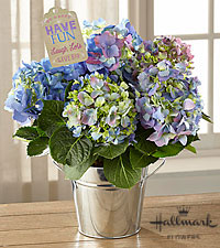 The FTD ® Have Fun, Laugh Lots Hydrangea Plant by Hallmark