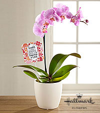 The FTD ® Bright & Beautiful Orchid by Hallmark