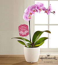 The FTD ® Mother 's Day Beauty Orchid by Hallmark