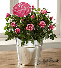 The FTD ® Mother 's Day Sweetness Mini Rose by Hallmark