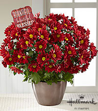 The FTD ® Autumn Inspiration Mum Plant by Hallmark