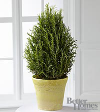 The FTD ® Rosemary Riches Tree by Better Homes and Gardens ®