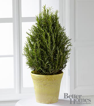 The FTD&reg; Rosemary Riches Tree by Better Homes and Gardens&reg;
