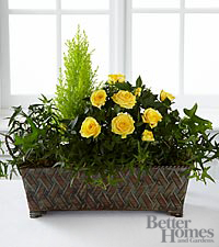 The FTD® Sunny Silhouettes Windowbox by Better Homes and Gardens®
