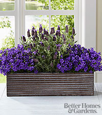 The FTD ® Editor 's Choice Purple in Bloom Windowbox by Better Homes and Gardens ®