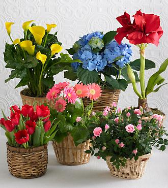 Monthly Blooming Plant Program