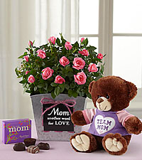 Mom is Love Mini Rose Plant with Chocolates & Plush Bear - Best