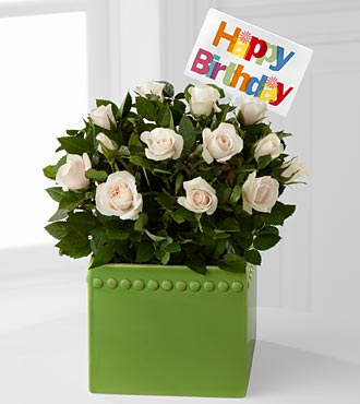 Green Greetings Happy Birthday Mini Rose Plant