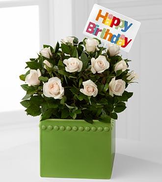 Green Greetings Happy Birthday Mini Rose Plant