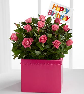 Pink Celebrations Happy Birthday Mini Rose Plant
