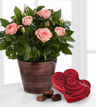 Sweet Beauty Mini Rose with Chocolates