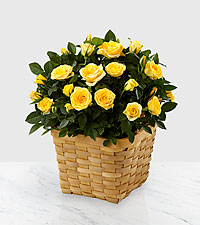 Lighthearted Moments Mini Rose Plant - 6.5-inch