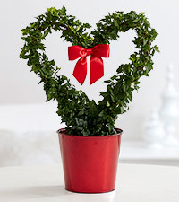 My Heart is Yours Ivy Topiary