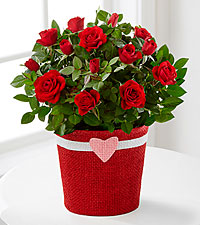 Romantic Intentions Mini Rose with Single Box of Chocolates - 4.5-inches