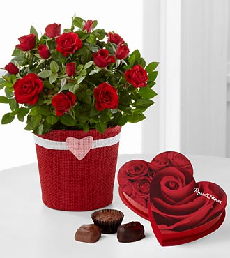 Romantic Intentions Mini Rose with Two Boxes of Chocolates - 4.5-inches