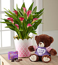 Pink Ombre Calla Lily Plant with Plush Bear and chocolate