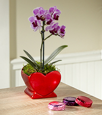 Heart Full of Love Valentine 's Day Orchid Plant with Chocolate Covered Oreo ® -Better