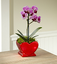 Heart Full of Love Valentine 's Day Orchid Plant - Good