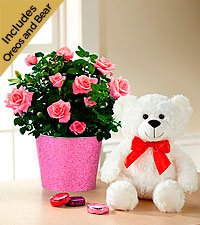 Kiss Me Quick Valentine 's Day Mini Rose with Chocolate & Plush Bear