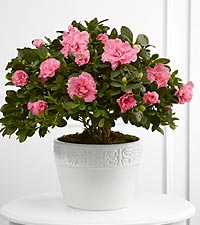 The FTD&reg; Vibrant Sympathy&trade; Planter