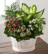 The FTD ® Rural Beauty™ Dishgarden