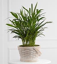 The FTD&reg; Deeply Adored&trade; Palm Planter