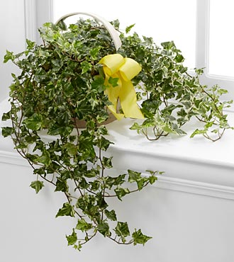 The FTD&reg; Solace&trade; Ivy Planter