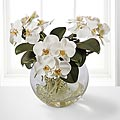 Jane Seymour Silk Botanicals White Phalaenopsis Orchid in Glass Ball Vase