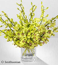 Smithsonian Garden Glow Mokara Orchid Bouquet - 10 Stems - VASE INCLUDED