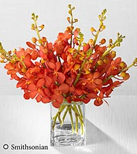Smithsonian Tangerine Dream Mokara Orchid Bouquet - 10 Stems - VASE INCLUDED