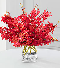 Rouge Reflections Mokara Orchid Bouquet - 10 Stems - VASE INCLUDED