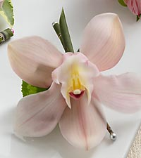 The FTD&reg; Pink Cymbidium Boutonniere
