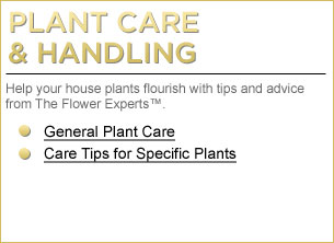 Plant Care & Handling