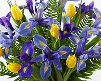 Blue Horizons Iris & Tulip Bouquet