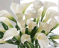 Simplicity Luxury Calla Lily Bouquet